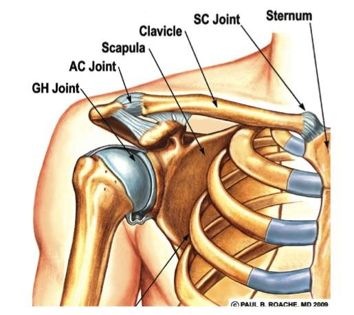 Sore Trapezius fixed with two fingers : Staminist Cycling Forum