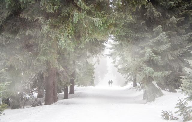 winter-trail-forest-656552_1920.jpg